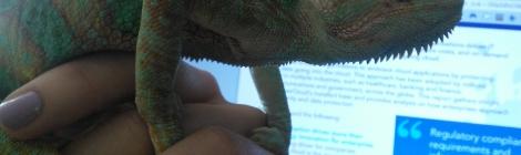 Negative Review Chameleon
