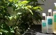 Cannatera CBD oil skincare line